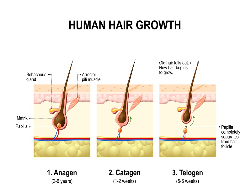Hair Regrowth System maria-trading.com